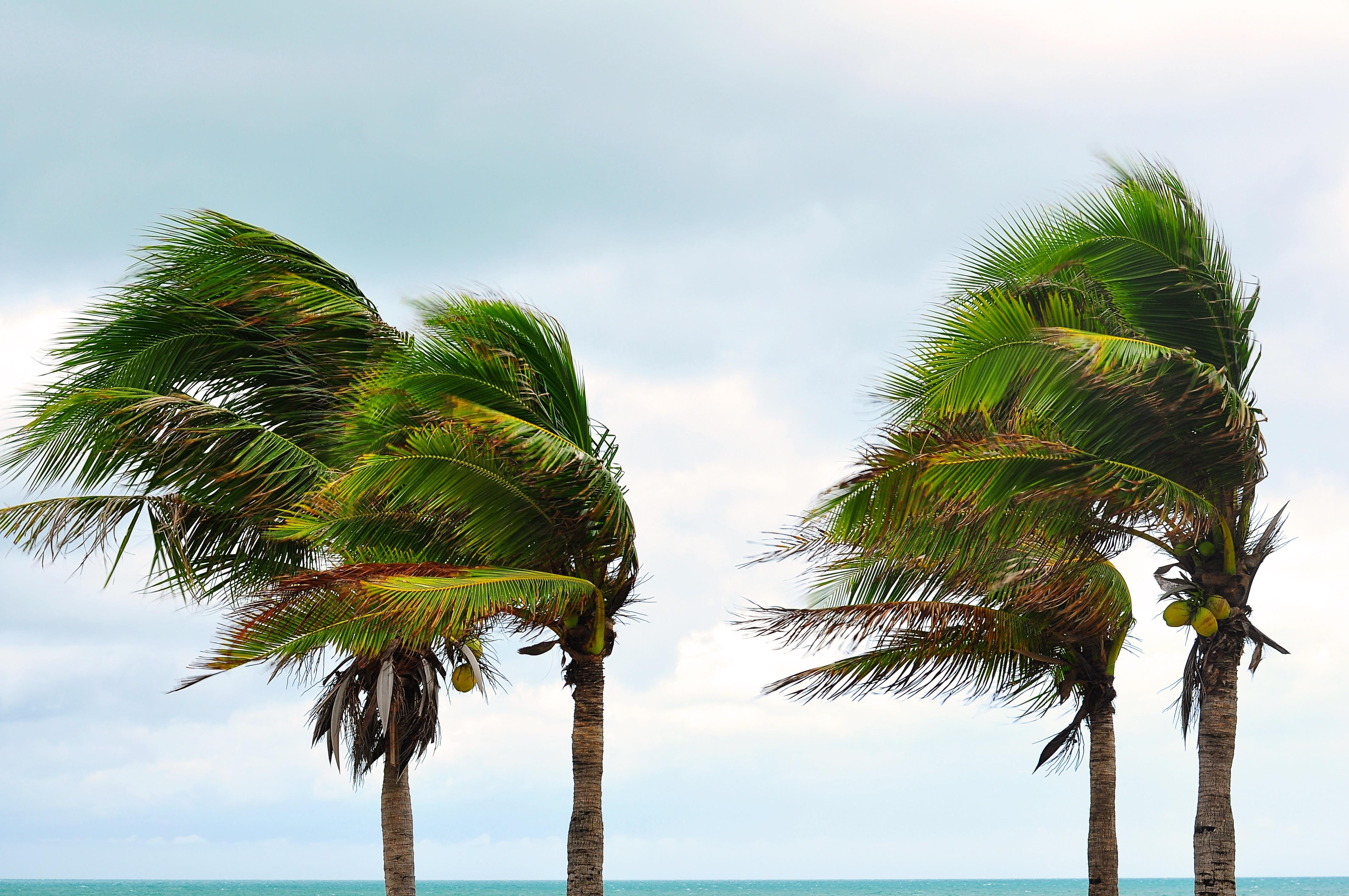Advierte el CUD sobre preparación para el huracán Irma